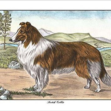 """Buyenlarge 0-587-11814-8-P1827 """"Scotch Collie"""" Paper Poster, 18"""" x 27"""""""
