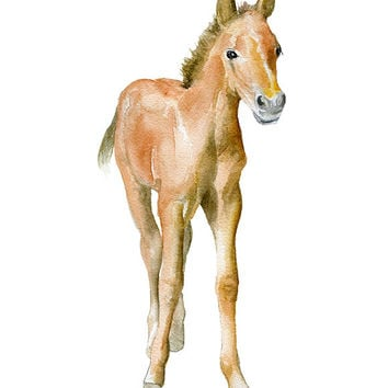 Foal Horse Watercolor - Pony