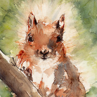 Squirrel, Animal Art, Woodland Forest, watercolor painting art print, reproduction original watercolor painting.