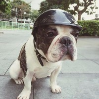 Motorcycle Protective Helmet Dog Clothes & Cat Clothes