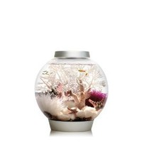 Amazon.com: Baby biOrb Aquarium with LED Light, Silver, 4 Gallons: Pet Supplies