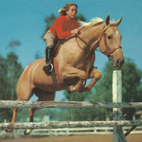 Palomino Panic - Vintage 1950s Frightened Glam Girl Jumping Horse Plastichrome Postcard