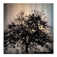 fascinating tree Shower Curtain> fascinating tree> MehrFarbeimLeben