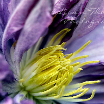 Flower Photography, Macro Photography, Wall Decor, Wall Art, Flowers, Garden, Lavender, Green, Clematis, Purple