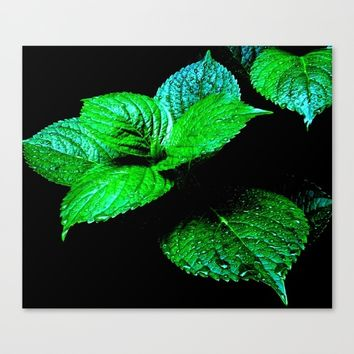 Mint Leaves Canvas Print by Moonshine Paradise
