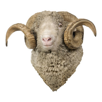 Sheep Mount Wall Decal