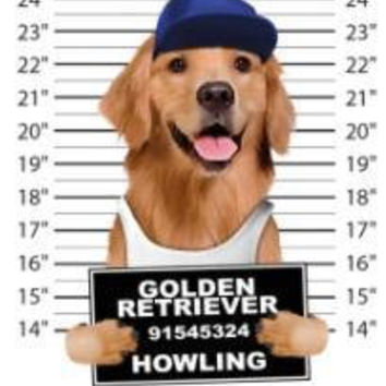 cool golden retriever howling t-shirt mens t-shirts dogs mugshot t-shirts mug shirt dog pets tshirt pet lovers