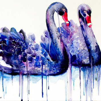"Black Swans watercolor painting print 8"" x 12"" bird watercolors, swans, swan, birds, bird, animal"