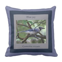 Blue Jay pillow, framed in blues & gray Pillow