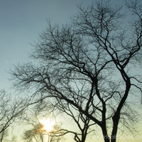 Photograph Winter Tree Silhouettes at Sunset by VirtualityStudio