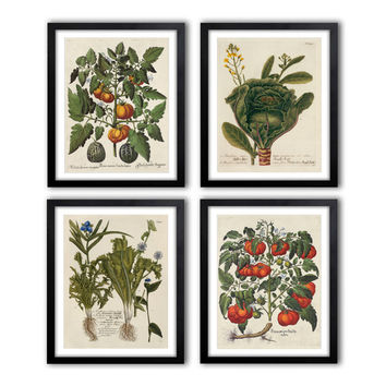 Set of 4. Digital Instant Download Antique Botanical Illustrations 1640-1900 poster set, Botanical Vintage Art Prints, pictures set *20.07*