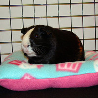 Square bed for hedgehogs, guinea pigs, ferrets, rats, rabbits and other small animals cavy