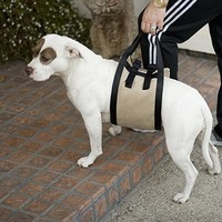 Companion Mobility Harness