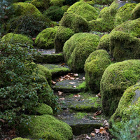 GARDEN PATH green, zen, nature photography print