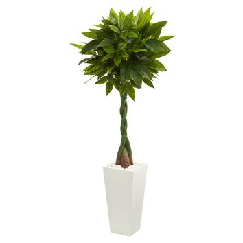 5.5' Money Artificial Tree in White Tower Planter (Real Touch)