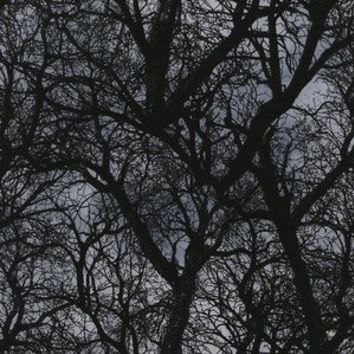Dark Tree Branches in Black (Timeless Treasures House Designer - Wicked Eve)
