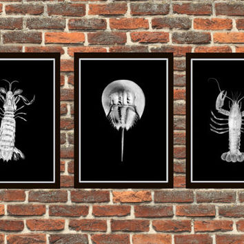 4 Colors Background Crustaceans Bathroom Print Set 4 prints Bathroom Decor Marine Biology Art Vintage Crustaceans Vintage Illustration *4*