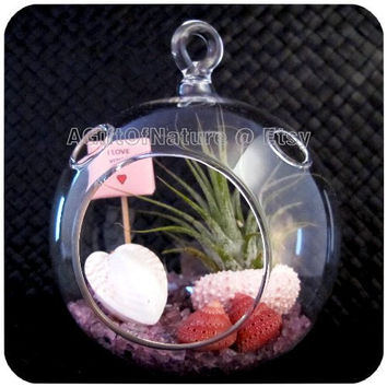 Air Plant Gift Tillandsia Terrarium Kit Hanging Glass Orb - Amethyst Ice Crystals Miniature Sign Heart Seashell Decor Favor Wedding Party