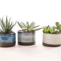 Set of Three Ceramic Planters for Succulents