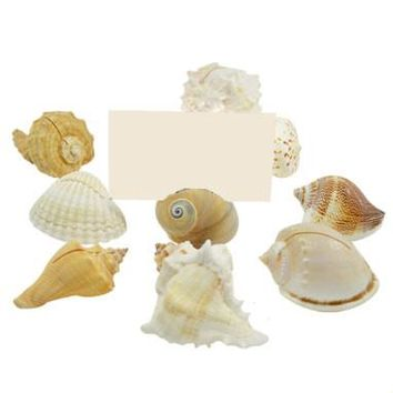 "Sea Shell Place Card Holders in Assorted Shapes & Sizes - Pack of 10 - 2.75""-3.5"" Long"