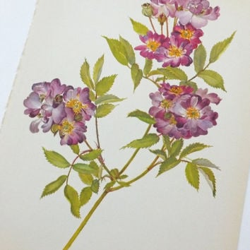 Vintage Botanical Print, Veilchenblau Rose, Art, Wall Hanging, Home Decor, Kaplicka
