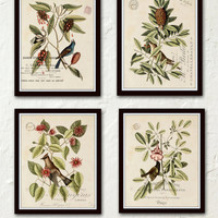 Vintage Bird And Botanical Print Set