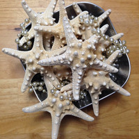 White Knobby Starfish--Natural--Beach Decor--Coastal--DIY--Supply