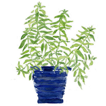 Lemon verbana plant  in a Blue  planter, original watercolor painting, herb, kitchen decor, mothers day, wall decor,  Cottage chic,