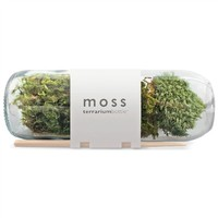 Moss Terrarium Bottle (491562026), Planters, Eco-Friendly Living Walls & More | bambeco