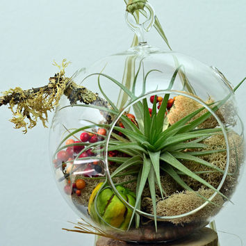 Air Plant Terrarium // Hanging Glass Orb // Home and Garden // Green Gift