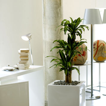 Cube Planter - Lacquered