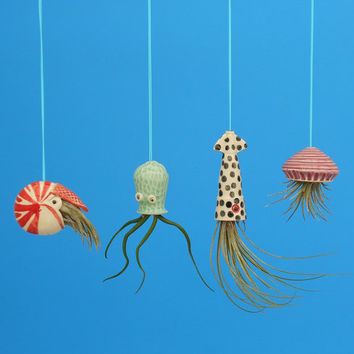 Miniature Hanging  Air Planter Collection, Live Ornament, Nautilus, Jellyfish, Squid, Octopus,Whimsical Gift