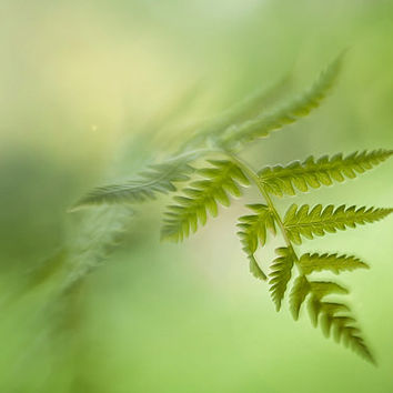 Spring fern photo print, green fine art print, botanical fine art photography, fern photography, wall decor photo print, woodland print art