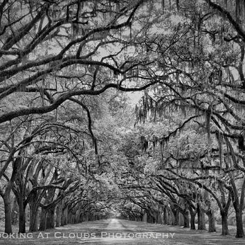 Avenue of the Oaks, landscape art, perspective, black and white, oak trees, spanish moss, tree lined road, peaceful zen photo, nature