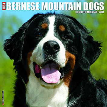 Just Bernese Mountain Dog 2017 Wall Calendar