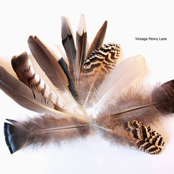 12 Foraged Cruelty Free Feathers, Alter, Crafting, DIY, Supplies, Wild Turkey, Bird Feathers