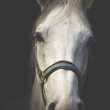 Horse photography, horse art, white horse print, fine art equine photography, equestrian decor, equestrian home decor, horse wall decor