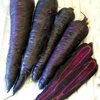 300pcs Purple Dragon Carrot Seeds Fruit Vegetable Seeds Sweet And Healthy Plant For Home & Garden  Ginseng Wucun Carrot