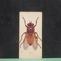Vintage Fly Insect Flash Card Color Illustration Paper Ephemera Art Decor Nature Bug Collage Crafts Supply Housefly