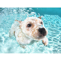 Underwater Puppies Book | Seth Casteel