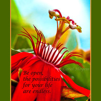 Red Flower 5x7 Nature Photo with Inspirational Saying