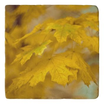 Yellow autumn maple leaves. trivet