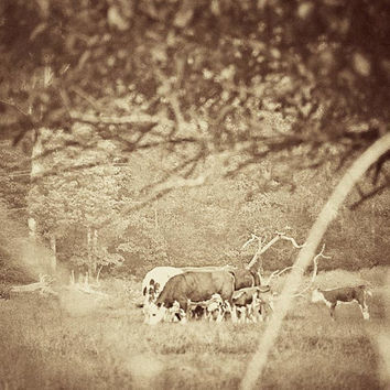 Farmland photo sepia brown white beige vintage style cows grazing behind a hedgerow 8x8 art print