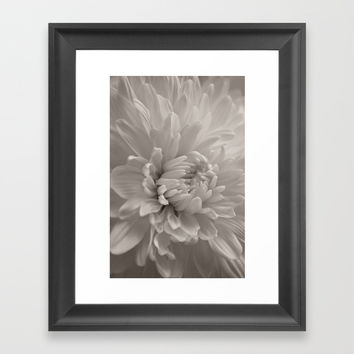 Monochrome chrysanthemum close-up Framed Art Print by ARTbyJWP