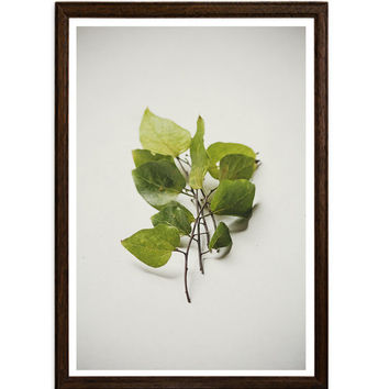 Green Home Decor Leaves Still Life Fine Art Photography Wall Art Home Decor Botanical Print Nature Photography Home Decor
