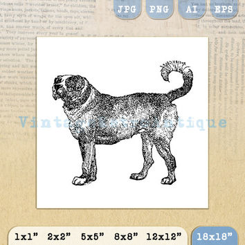 Digital Printable Mastiff Dog Graphic Dog Download Image Illustration Antique Clip Art 18x18 HQ 300dpi No.4216