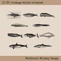 Vintage Whale Clip Art Set – 16 PNG clip art whale images plus photoshop ABR brushes – Whale Stamp Set – instant download – commercial use