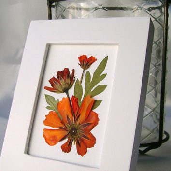 Pressed flower picture, Miniature framed picture, Orange cosmos, Brite lites cosmos, Real garden flowers, Floral picture, Dried botanicals