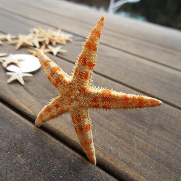 Natural Starfish Figurines Miniatures Wishing Bottle Sea Star