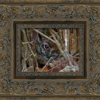Camo Rabbit Framed Art